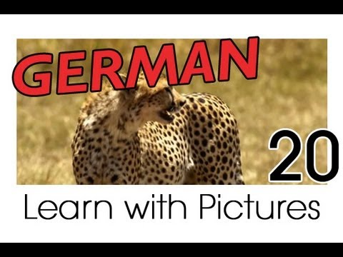 Learn German - Safari Animals Vocabulary