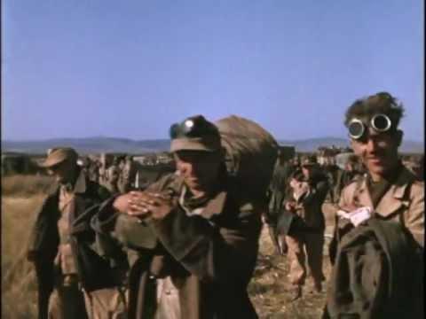 Tunisian Campaign (1943)