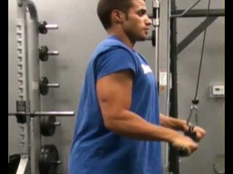 Triceps, Press Down, Straight Bar : BeYourTrainer.com
