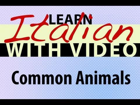 Learn Italian with Video - Common Animals