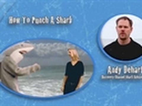 Shark Week 101 - How to Punch a Shark