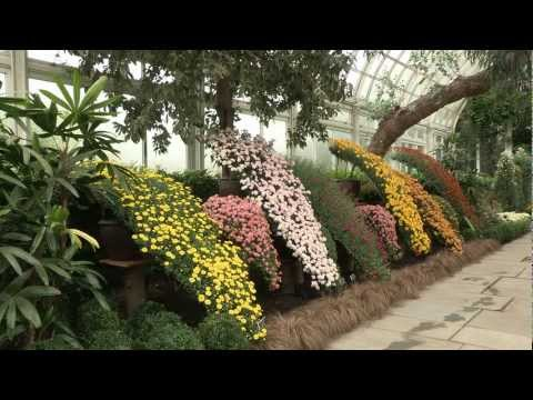 Fall Flowers of Japan