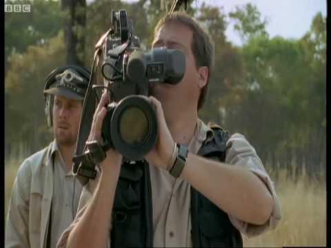 The dangers of wildlife filming - Rhinos - Wild & Dangerous - BBC