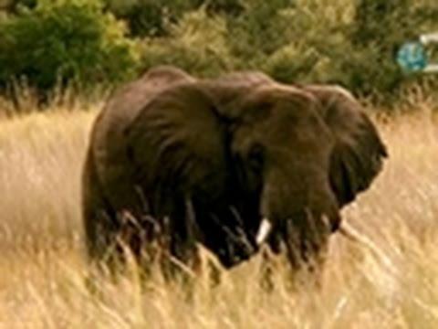 Dual Survival 2- Horny Elephant