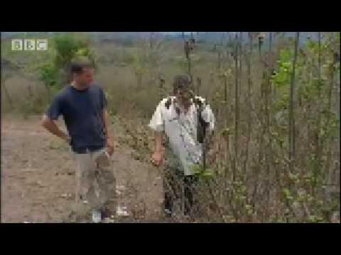Left wing guerillas in Honduras - BBC Travel