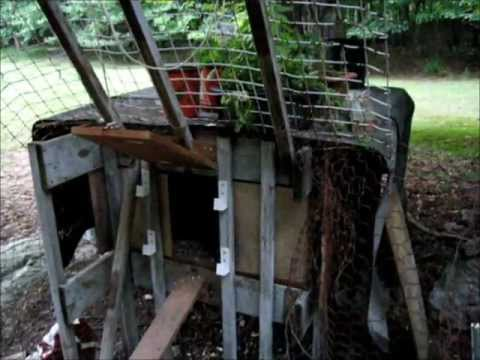 The Chicken Bunker - a predator resistant chicken coop