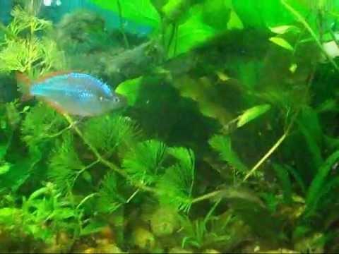 10 gallon betta tank betta lagoon update