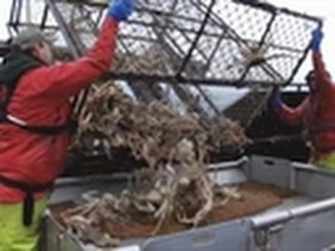 Down and Dirty Fishery | Deadliest Catch