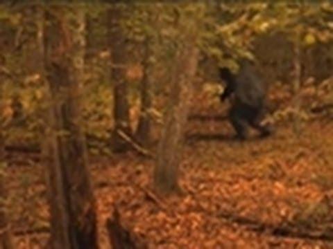How Does Bigfoot Walk? | Finding Bigfoot