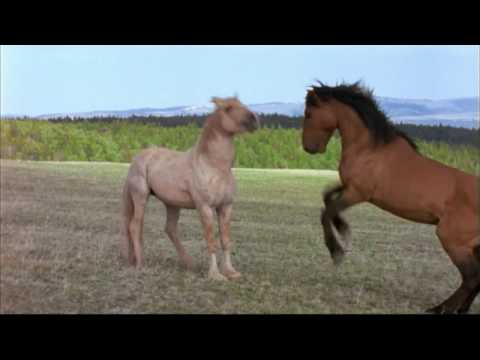NATURE | Cloud: Challenge of the Stallions | Preview | PBS