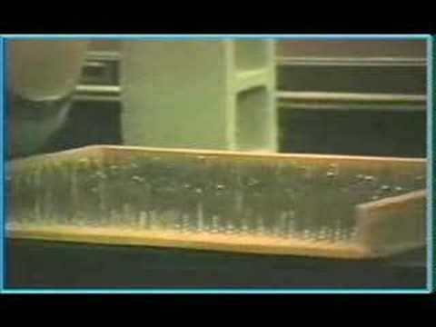 conceptual physics Bed of Nails demo