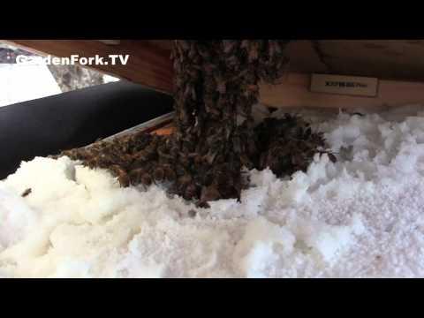 Winter Feeding Beginner Beekeeping GardenFork.TV