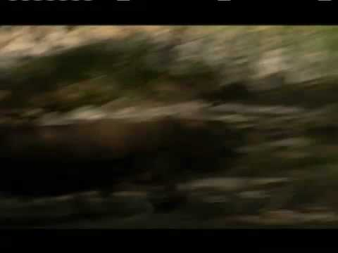 NATURE | The Dragon Chronicles | Komodo Chases Rom | PBS