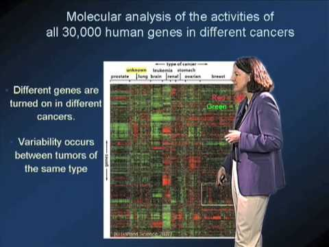 Molecular Genetics and Cancer
