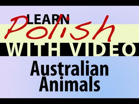 Learn Polish with Video - Australian Animals
