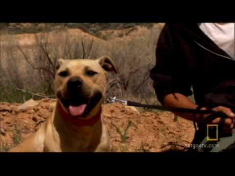 Vick Dog Rehab