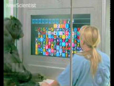 New Scientist TV - Nov 2009