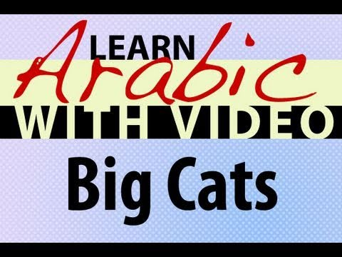 Learn Arabic with Video - Big Cats