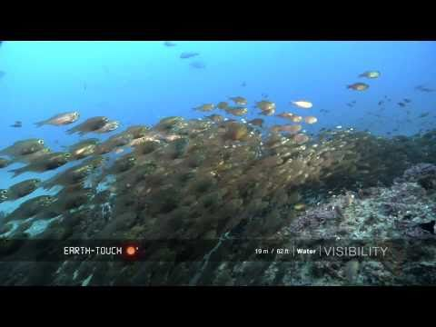 Animals congregate on Mozambique reef