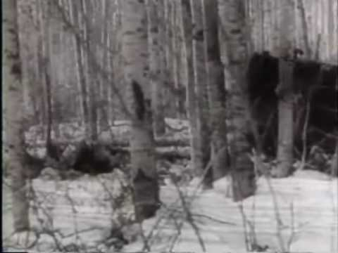 United News: U.S. and Canada Push Strategic Alaska Highway - 1943