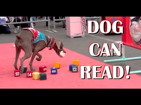 Dog Can Read!- clicker dog tricks training