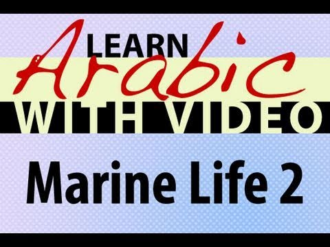 Learn Arabic with Video - Marine Life 2
