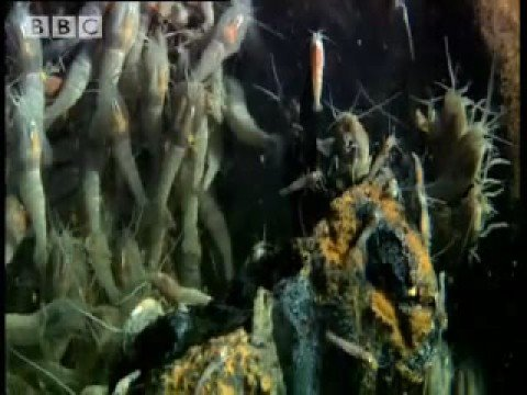 Witnessing the birth of life on Earth? - The Abyss - BBC wildlife