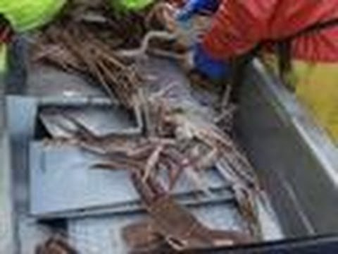Awesome Fishing   Deadliest Catch