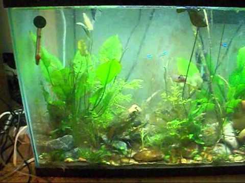 29 gallon planted tank episode 11