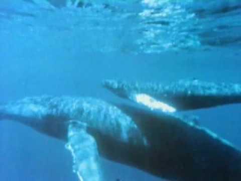 Carl Sagan - Cosmos - Evolution of Whales