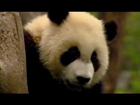Quake Pandas Hanging On