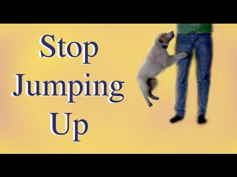 Dog Training: How to stop Jumping up!- clicker dog training