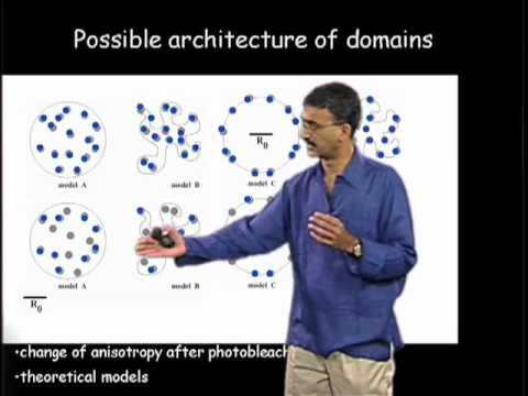 Satyajit Mayor Part 2: Looking for Functional Rafts in Cell Membranes