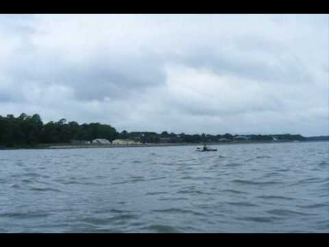 Ospreys Bombing Live-Lined Croakers while Kayak Fishing