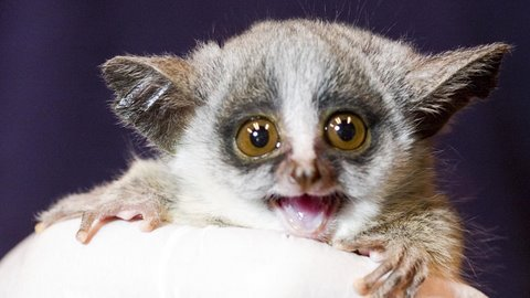 Bushbaby Babies! (Behind the Scenes)