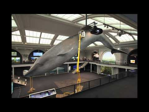 Blue Whale Cleaning Time-Lapse