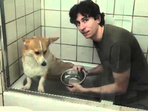 How to Give a Bath to a Dog That Hates Water