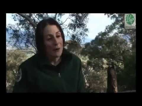 Bonorong Interactive - Meet the Keepers - Petra intro