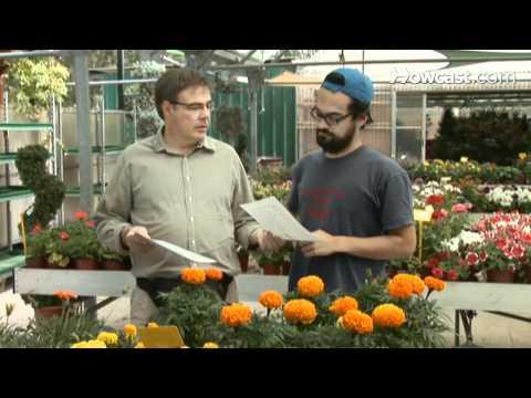 How To Start a Garden Club
