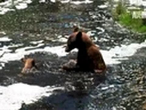 The Bear Whisperer- Mother Bear and Her Cub