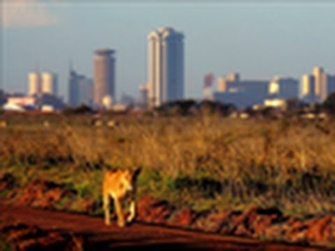 National Geographic Live! - Living with Urban Lions