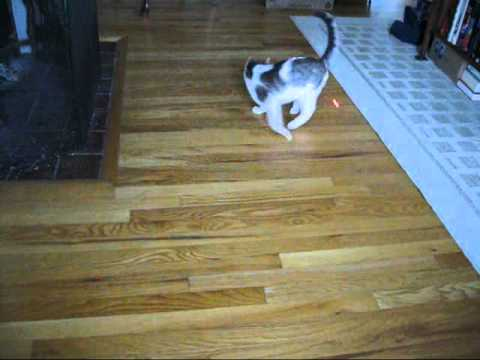 Humorous video of a cat chasing a laser.