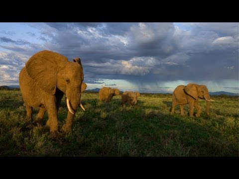 National Geographic Live! - Joyce Poole: The Elephant Network