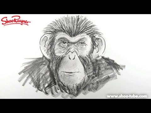 How to draw a Monkey from the rise of the planet of the apes - spoken tutorial