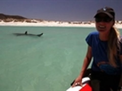 Shark Week - Great White Invasion | Sunbathing Sharks