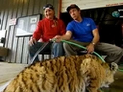 Dirty Jobs- Mike Rowe Bathes a Liger