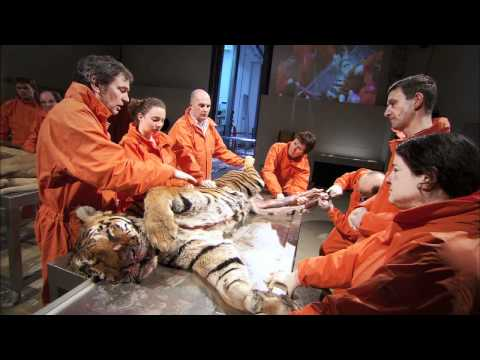 "Inside Nature's Giants |  ""Big Cats"" - Preview 