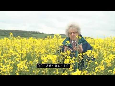 Plants & Chemistry (extra footage)