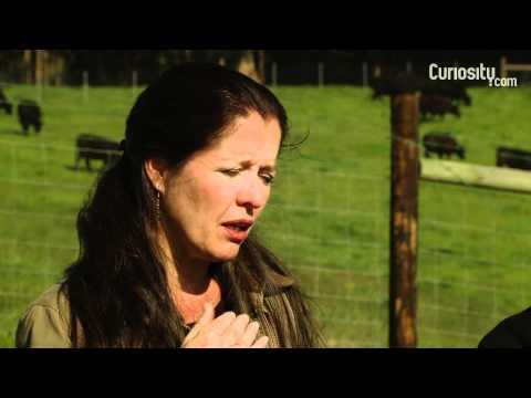 Nicolette and Bill Niman: Animal Farming 9 - 5?
