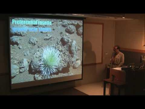 Biogeomorphic and Ecological Influence of Stones on Haleakala Silverswords Part 4